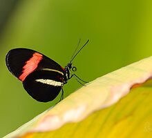 Butterfly - Climbing the hill by Richard Eijkenbroek