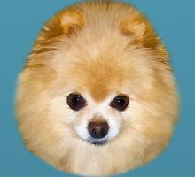 Pomeranian Dog by Delores Knowles