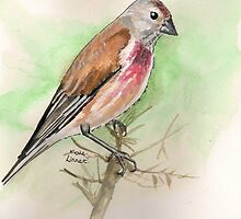 Linnet by Sam Burchell