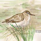 Common Sandpiper by Sam Burchell