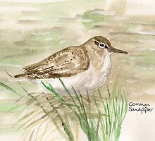 Common Sandpiper by Sam Burchell
