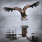 """Fishing Eagle"" by peaky40"