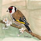 Goldfinch by Sam Burchell