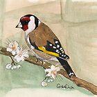 Goldfinch by Sam Burchell