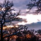 Winter sunset across the treetops by Tony Smith