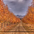 Autumn Leaves - Gulgong,NSW - The HDR Experience by Philip Johnson