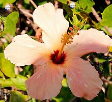 Hibiscus in pixie light by ♥⊱ B. Randi Bailey