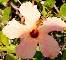 Hibiscus in pixie light by ♥⊱ B. Randi Bailey