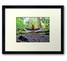 Nearby Woods 2 Framed Print