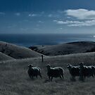 Moonlight Sheep by pablosvista2