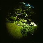 Fish Eye Botantic Gardens by mewalsh