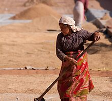 Rice Harvest: Drying the rice by Christopher Cullen