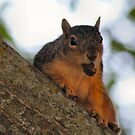 Nutty Squirrel by Keala