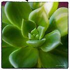 A Succulent Bit by Jessica Manelis