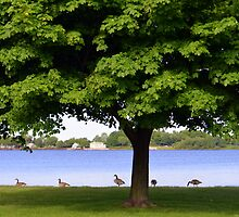 Geese Under a Tree by Debbie  Maglothin
