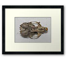 Barn Owl Supper Framed Print