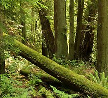 Deep Forest: Woodland Scenes From Southwest British Columbia by Wolf Read