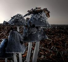 A Group Of Their Own ~ Coprinus lagopus by Charles & Patricia   Harkins ~ Picture Oregon