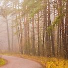 Road fog in forest. Landscape with a forest road by GrishkaBruev