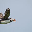 Puffin in flight by M.S. Photography & Art