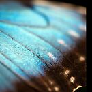 iPAD CASE Wings of pure blue by Darren Bailey LRPS
