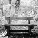 Waiting Bench. by igotmeacanon