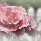 Romantic rose garden by Celeste Mookherjee