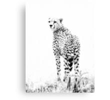 Cheetah black & white 1 Canvas Print