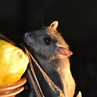 Fruit Bat by STEPHEN SHONE