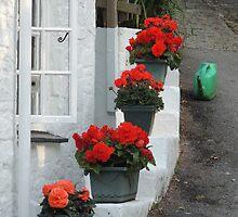 Red, Green and White by Alexandra Lavizzari