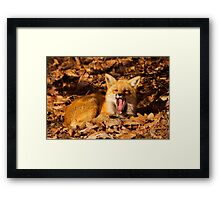 What a night Framed Print