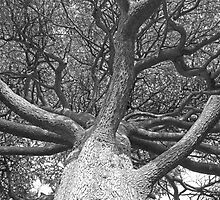 Tangled Branches by Sam Goodman