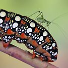 Backhopper by jimmy hoffman