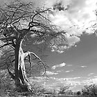 the lonely Baobab by Gigi Guimbeau