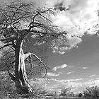 the lonely Baobab by Gigi Guimbeau