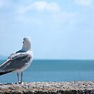 Seagull Looking out to Sea by Natalie Kinnear