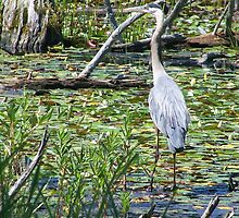 Wild Great Blue Heron  by Technologiic