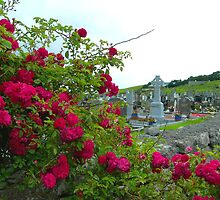 Irish Cemetary by gurineb