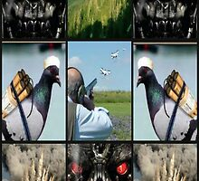 predator drone by DMEIERS
