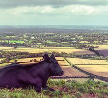 Daisy Enjoys the View from Truleigh Hill by Chris Lord