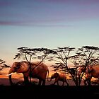 The Elephants'...  by Valerie Anne Kelly