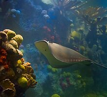 USA. Massachusetts. Boston. Aquarium. by vadim19