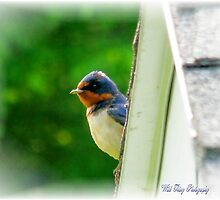 Feathered Friend by WildThingPhotos