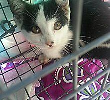 Rescued Kitten Twinkie by Jane Neill-Hancock