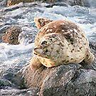 """ On The Rocks "" by Gail Jones"