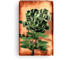 WILD IRISH ROSE - 051 Canvas Print