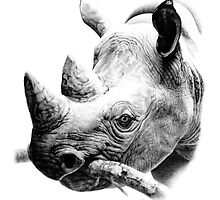 Rhino in Pencil by Paul-M-W