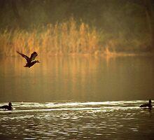 Morning Landing  by Lozzar Landscape