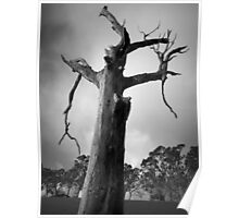 Scary Tree- Woodside Poster