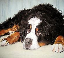 Bernese Mountain Dog Portrait by Oldetimemercan